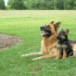 German Shepard mother and puppy